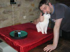 Katzenschutz_3