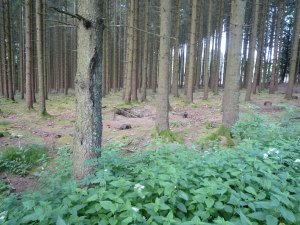 Easy Company foxholes in Jack's Wood